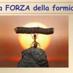 forza_formiche