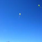 """I """"Cipì"""" sono alti nel cielo"""